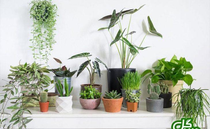 چند ترفند آسان برای زیبا شدن منزلتان با گیاهان آپارتمانی Image