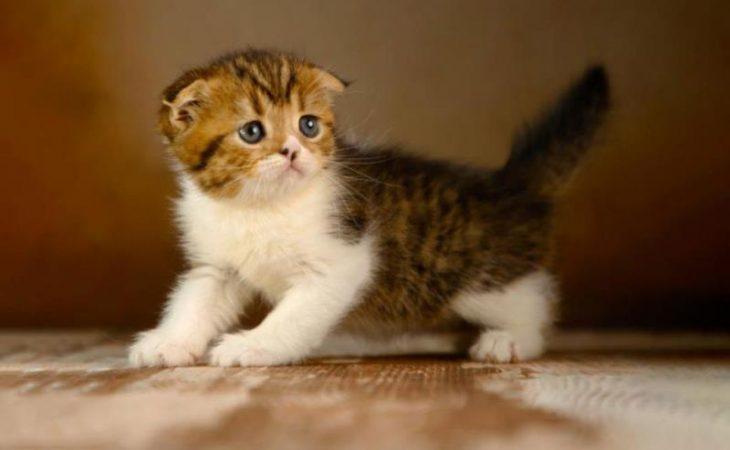 بچه گربه پرشین Image